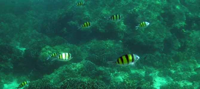 Mütter-Naturgesetz und Unterwasserkino (Phuket Teil 2)