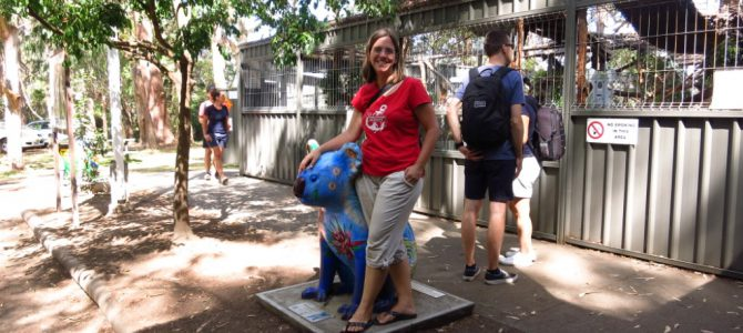 """Port Macquarie, kranke Koalas und andere """"tierische"""" Begegnungen"""